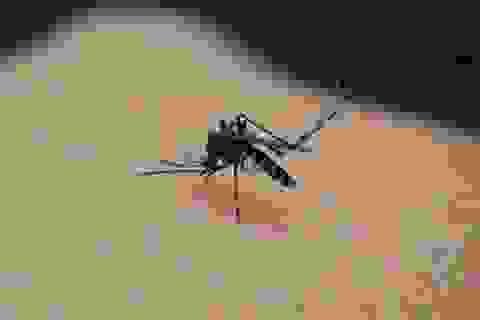 """""""Mẹo dùng điều hòa để chống muỗi hiệu quả"""" là thủ thuật nổi bật tuần qua"""
