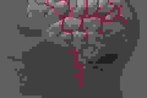 Não có nhiều thay đổi từ tuổi trưởng thành đến tuổi trung niên