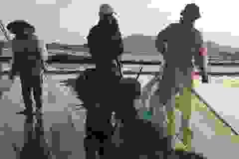 Chủ tịch tỉnh Thanh Hóa thông báo kết quả xác định nguyên nhân ngao chết