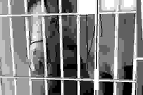 Ngựa bị cảnh sát nhốt vào tù vì làm hỏng xe người khác