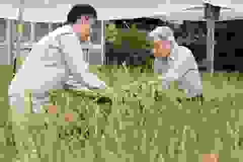 Nhà vua và Hoàng hậu Nhật Bản trồng lúa, nuôi tằm trong Hoàng cung