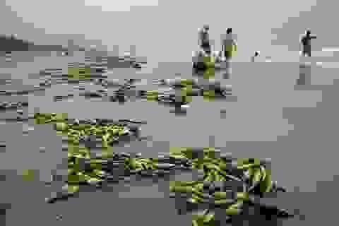 Chưa hết nghỉ lễ, biển Sầm Sơn đã nhếch nhác
