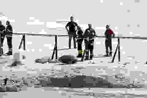 Cả nhà thiệt mạng vì rơi xuống miệng hố núi lửa khi tham quan