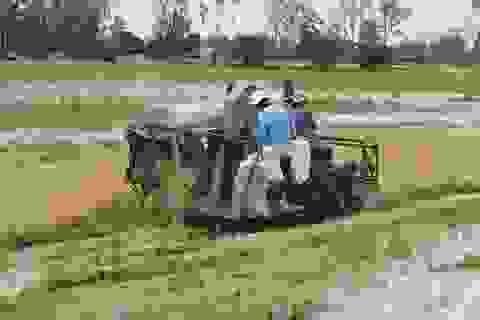 Hậu bão số 16, hàng chục nghìn ha lúa đổ ngã, 38 căn nhà hư hỏng