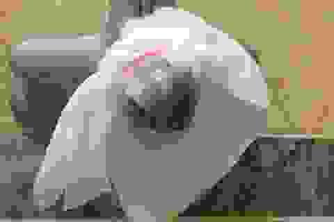 """Dân chung cư Hà Nội đeo """"khẩu trang"""" cho... vòi nước!"""