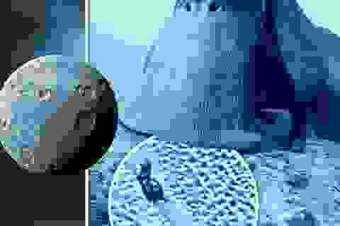 """Phát hiện """"Ốc sên vũ trụ"""" trong các bức ảnh chụp bề mặt sao Diêm Vương"""