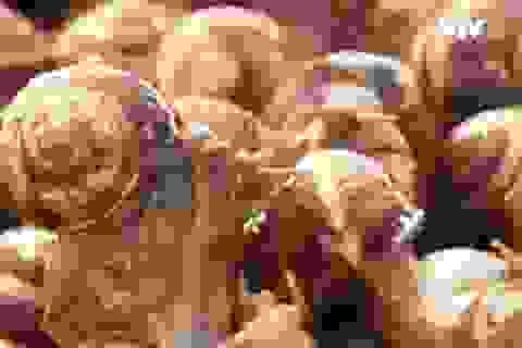Làm giàu nhờ nghề nuôi ốc sên ở Nga