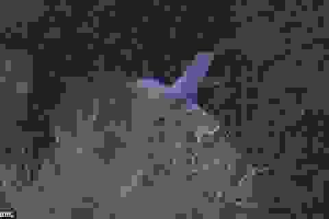 Đề nghị phong danh liệt sĩ cho phi công người Việt tử nạn tại Anh