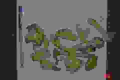 4 sai lầm chết người khiến nhận diện nhầm nấm độc