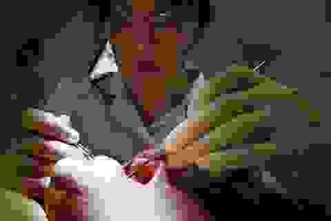 Răng bị tổn hại có thể mọc lại tự nhiên nhờ thuốc điều trị Alzheimer