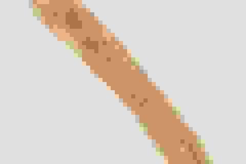 Biến đổi khí hậu có thể giết chết các vật ký sinh trùng