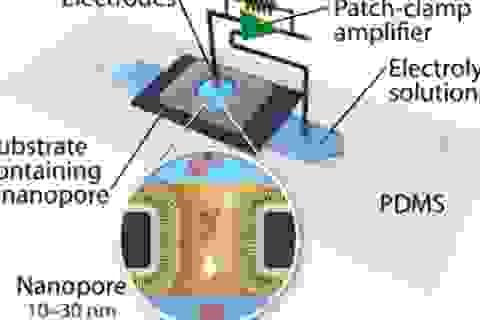 Kỹ thuật mới mang lại tiềm năng trong điều trị các bệnh Alzheimer và Parkinson