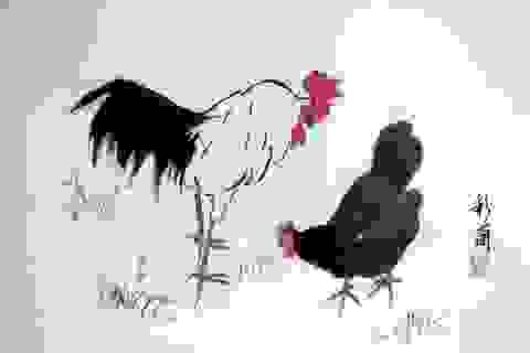 Những phát hiện khoa học thú vị về loài gà