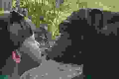 Đáng yêu nụ hôn qua cửa kính của tinh tinh và cậu bé 4 tuổi