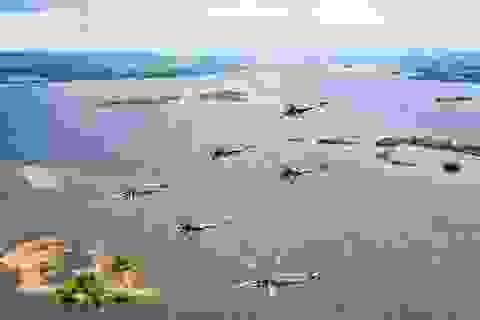 Chuyện về phi đội trực thăng Berkuty của Không quân Nga