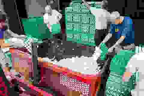 Trứng gà nhiễm thuốc trừ sâu được bán ở 15 nước châu Âu và Hong Kong