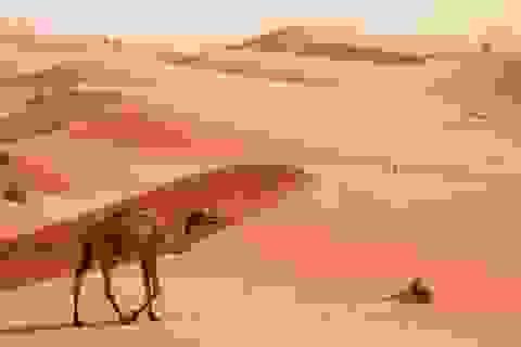 """8 địa điểm chụp ảnh """"câu like"""" đẹp nhất Dubai"""