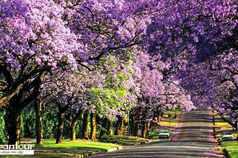 Vietrantour thành công xúc tiến du lịch Úc, Nam Phi