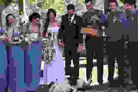 """Độc đáo """"đám cưới nông trại"""" của cặp đôi người Úc"""