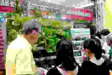 1 ha rau thủy canh ở TPHCM thu đến 5 tỷ đồng/năm