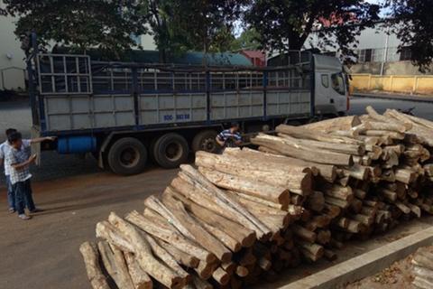 Bắt giữ xe tải vận chuyển gần 300 lóng gỗ lậu