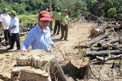 """Có hay không có việc lâm tặc """"móc ngoặc"""" với kiểm lâm phá rừng?"""