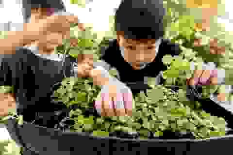 """Chuyên gia tâm lý Tô Nhi A:  """"Thiên nhiên chính là ngôi trường chất lượng cao để trẻ học sáng tạo!"""""""