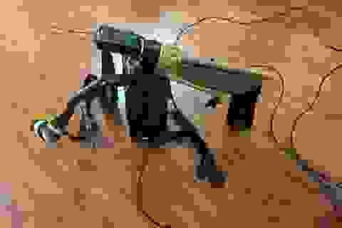 Hà Nội: Đôi nam nữ tự chế súng bắn điện để săn chó