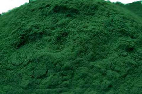 Mexico nghiên cứu thành công nhiên liệu sinh học từ tảo xoắn