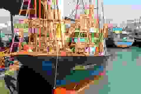 """Vụ đóng tàu cá vỏ thép: Loạt """"sếp"""" đăng kiểm bị kỷ luật vì """"trình độ hạn chế"""""""