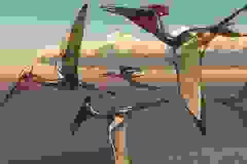 Phát hiện hàng trăm quả trứng hóa thạch của thằn lằn bay ở Trung Quốc