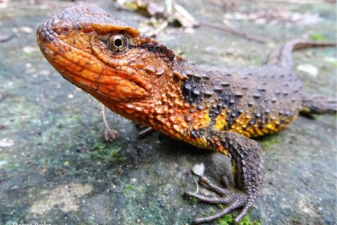 Phát hiện nhiều loài động vật mới ở khu vực sông Mekong