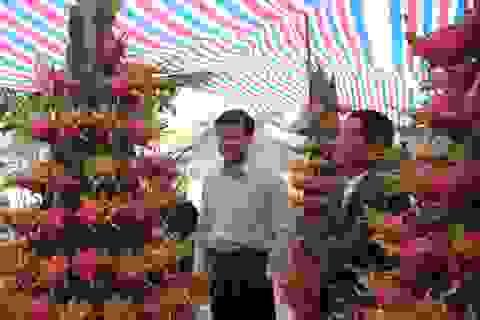 """Thanh long trồng chậu Tiền Giang lần đầu ra Vinh """"đón Tết"""""""