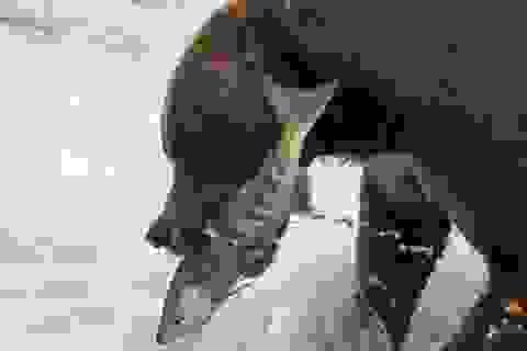 Thiên nhiên hoang dã đẹp mê hoặc trong cuộc thi ảnh của National Geographic