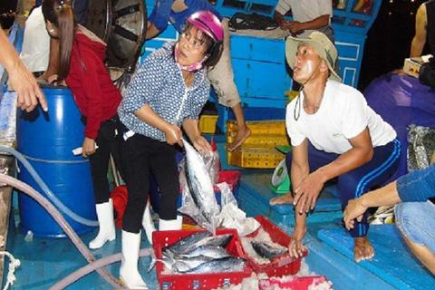 Ngang nhiên bắt người thu mua hải sản đóng tiền bảo kê