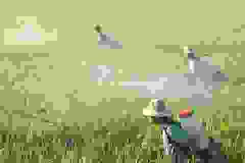 Hoá chất, thuốc trừ sâu ồ ạt vào Việt nam