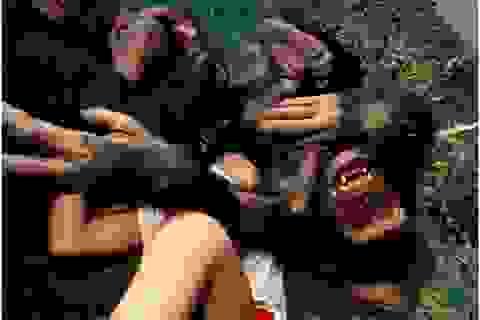 Động vật có biết cười như con người hay không?