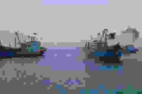 Tuần tra và xử phạt hàng loạt tàu cá, đánh bắt dã cào 'tận diệt' hải sản