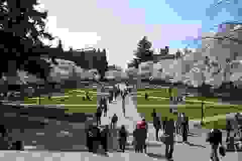 20 trường đại học Mỹ thu hút nhiều sinh viên nước ngoài nhất