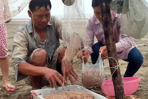 Ngư dân Quỳnh Lưu được mùa ruốc biển