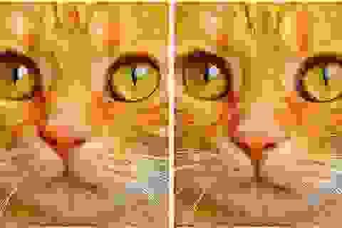 Thử tài tinh mắt: Đố bạn phát hiện điểm khác nhau giữa hai bức tranh