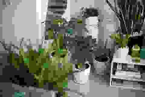 Yếu tố xanh trong căn hộ chung cư: phép màu cho cuộc sống hiện đại