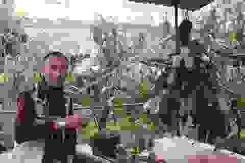 Chiêm ngưỡng vườn lan bạc tỷ đẹp hiếm có của đại gia Hà thành