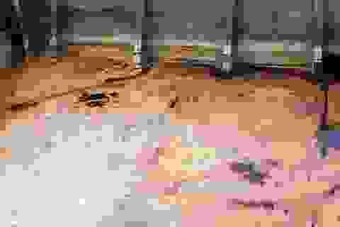 Vụ cá chết trên sông Âm: Các chỉ tiêu đánh giá ô nhiễm đều vượt ngưỡng