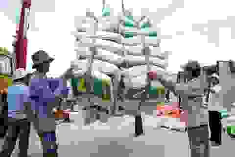 Trung Quốc lại ồ ạt nhập khẩu gạo nếp Việt Nam