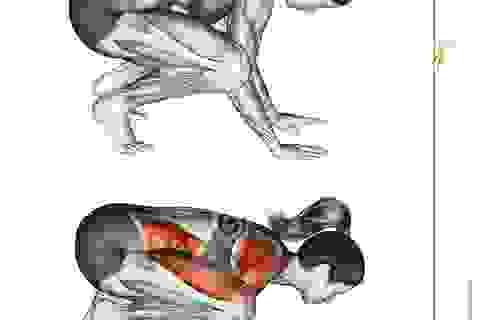 Động tác yoga tác động tới các cơ như thế nào?