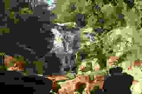 """Hai người tử nạn tại thác Đà Lạt: Tour du lịch """"chui"""" gây họa"""