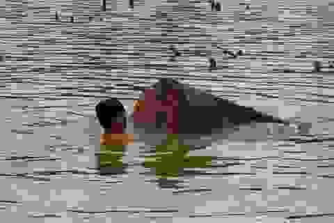 """Vụ lặn sông tìm gỗ lậu """"khủng"""": Vớt được 10,7m3 gỗ"""