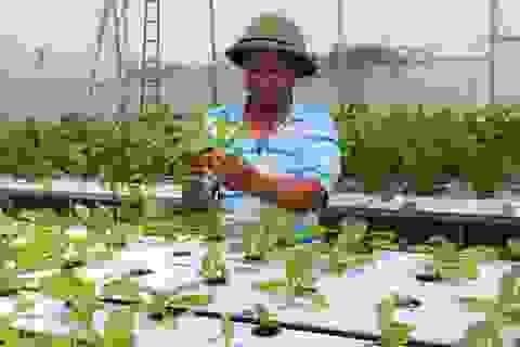 Người đầu tiên ở xứ Nghệ tiên phong với cách trồng rau không cần đất