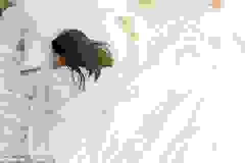 Tại sao giờ đi ngủ lại rất quan trọng?